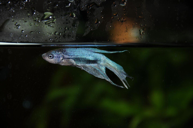 Behover Akut Hjalp Akvariefisk Ifokus
