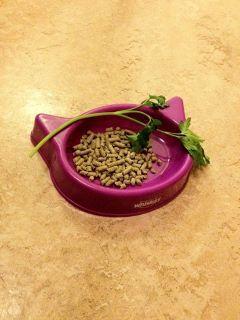 bra pellets till kanin