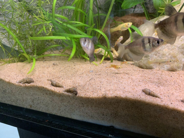 Nephis Akvarietrad 2 Akvariefisk Ifokus