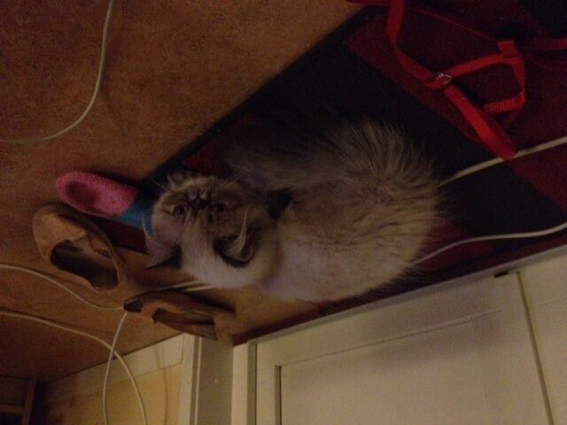 kattens päls skivar sig