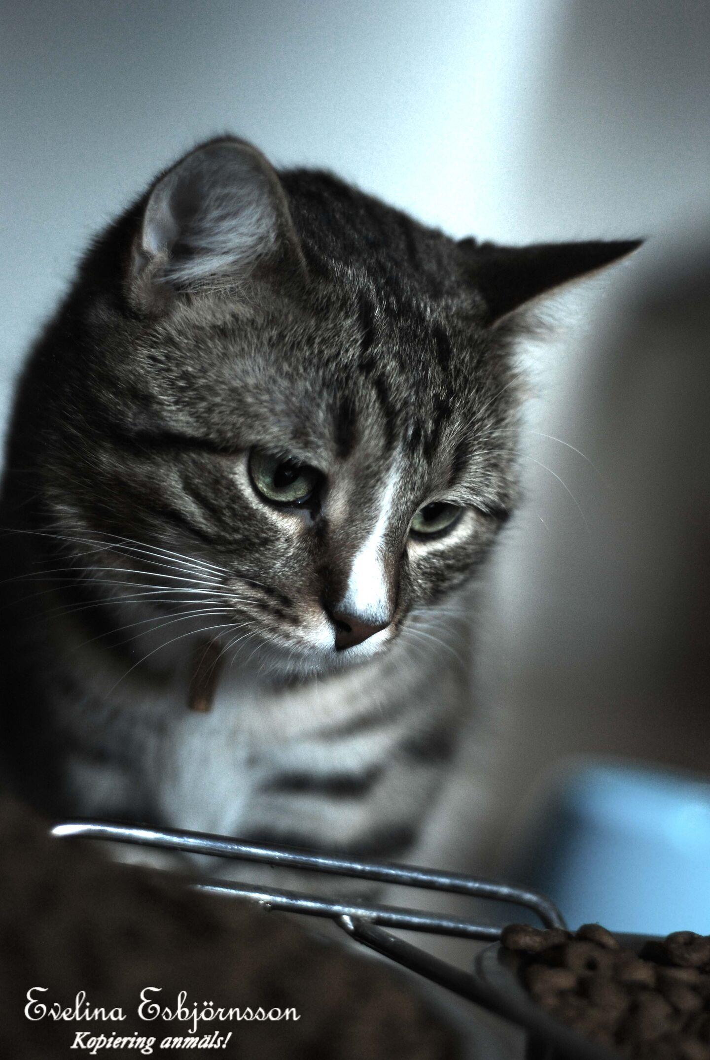 katt lös i magen foderbyte
