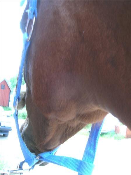 svullna lymfkörtlar häst