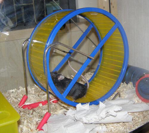 Hjul till mus | Mus iFokus