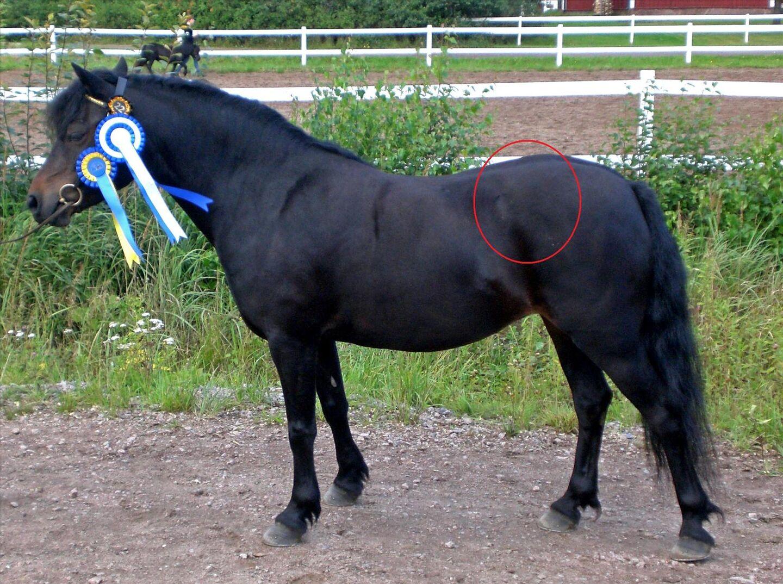 bukig häst proteinbrist