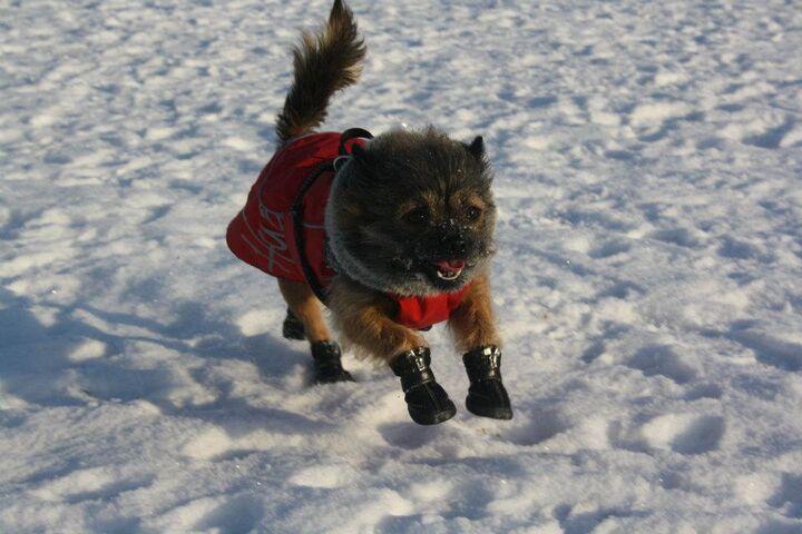 Neggativ mot hundskor? | Hundar iFokus
