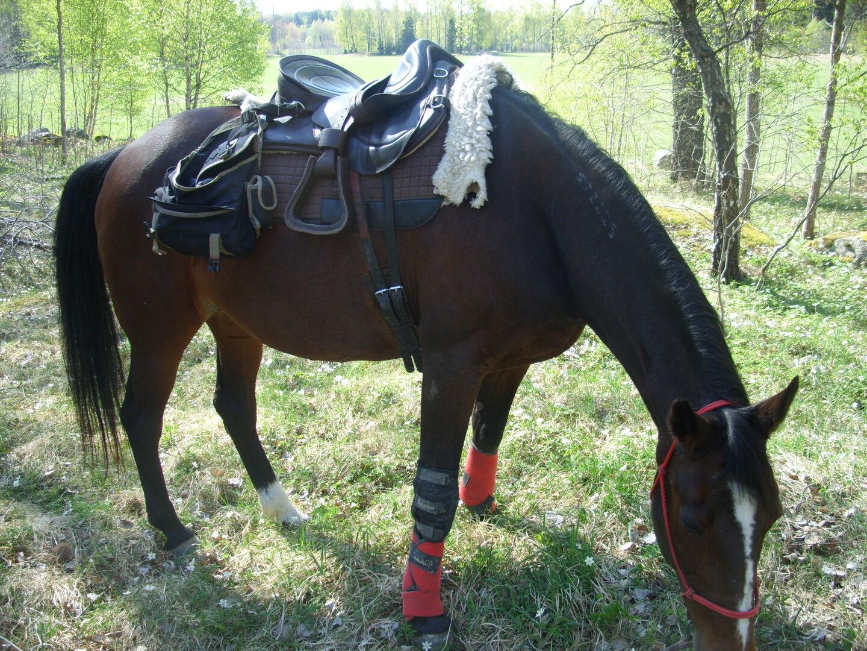 benskydd bäst i test häst