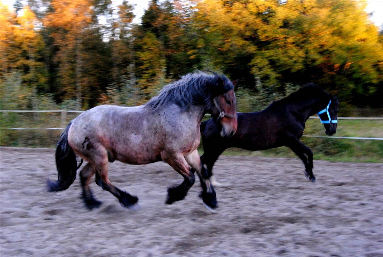 för mycket protein symptom häst