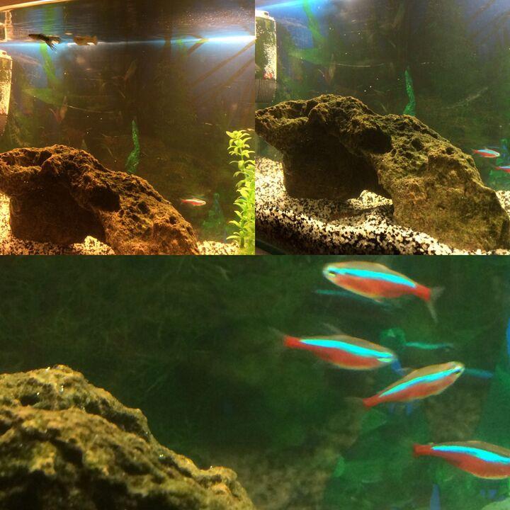 Vårt första akvarie 54l | Akvariefisk iFokus