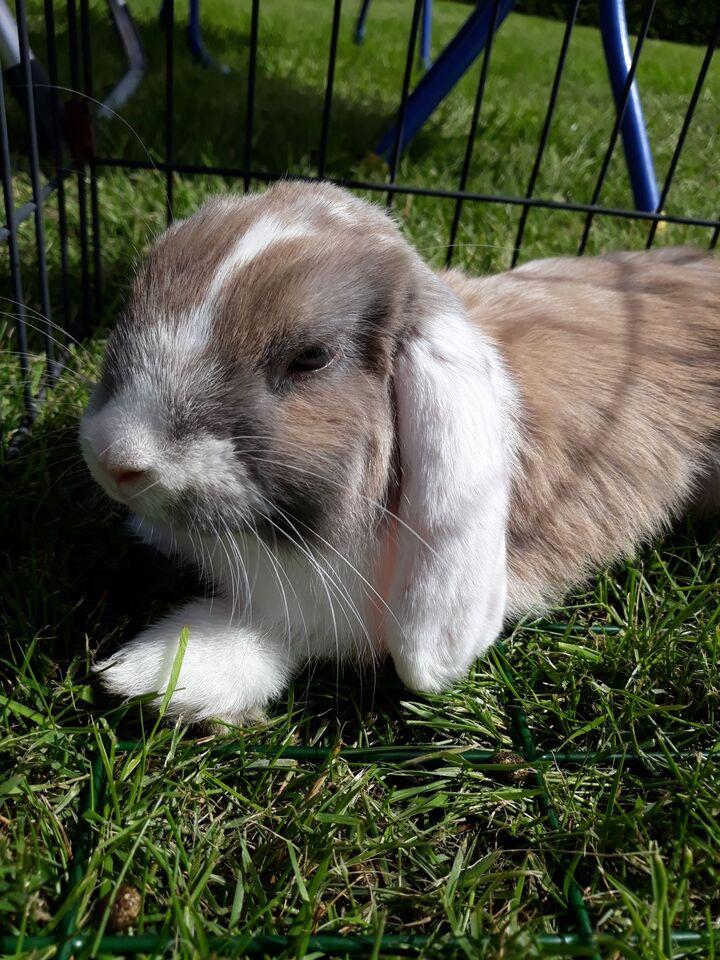 Din kanin+färg och teckning | Kanin iFokus