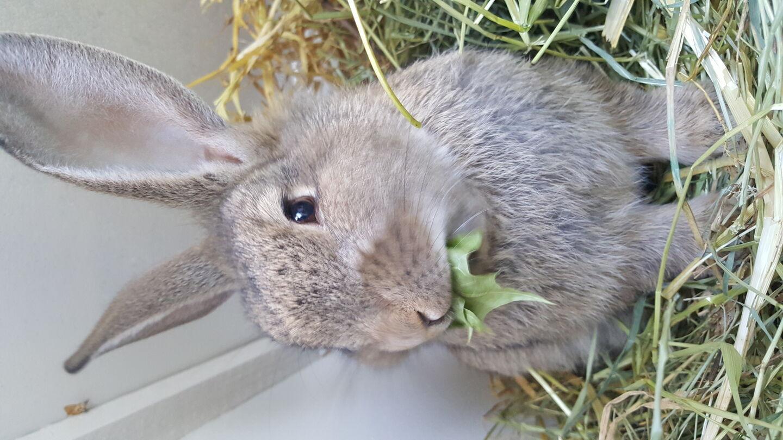 hur mycket pellets ska en kaninunge ha